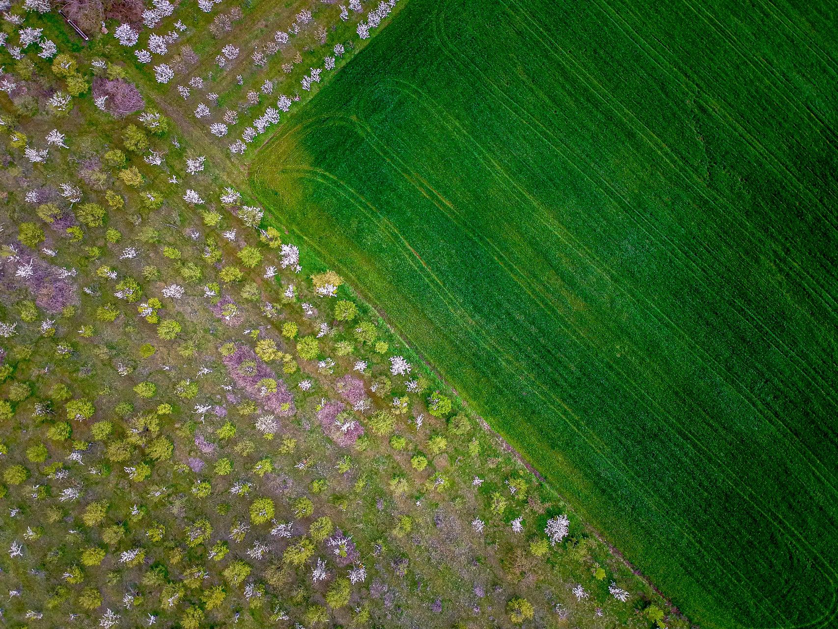 Пролет пукна | Author Владислав Русев - vl.rusev | PHOTO FORUM