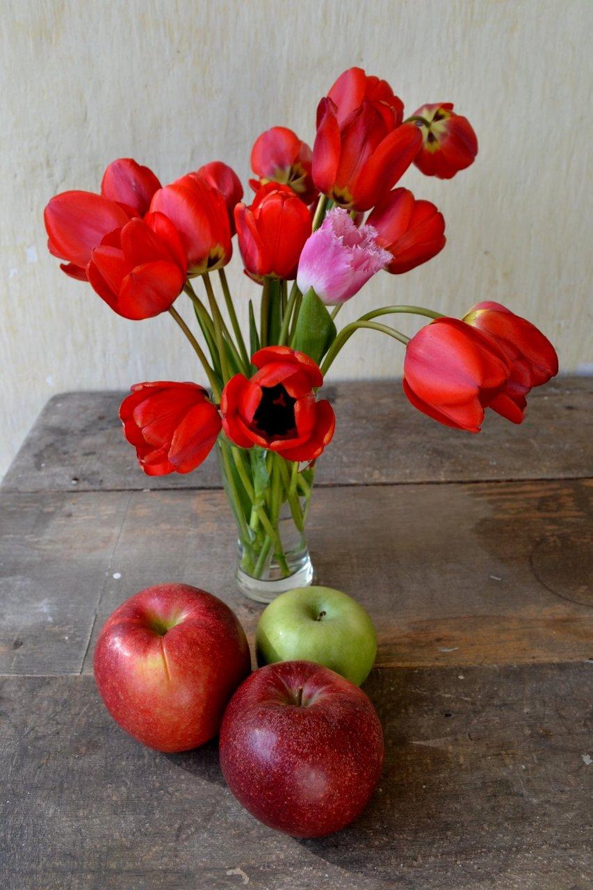 Пролетни лалета и есенни ябълки | Author Kristina Miteva (Candysays) - angeldust | PHOTO FORUM
