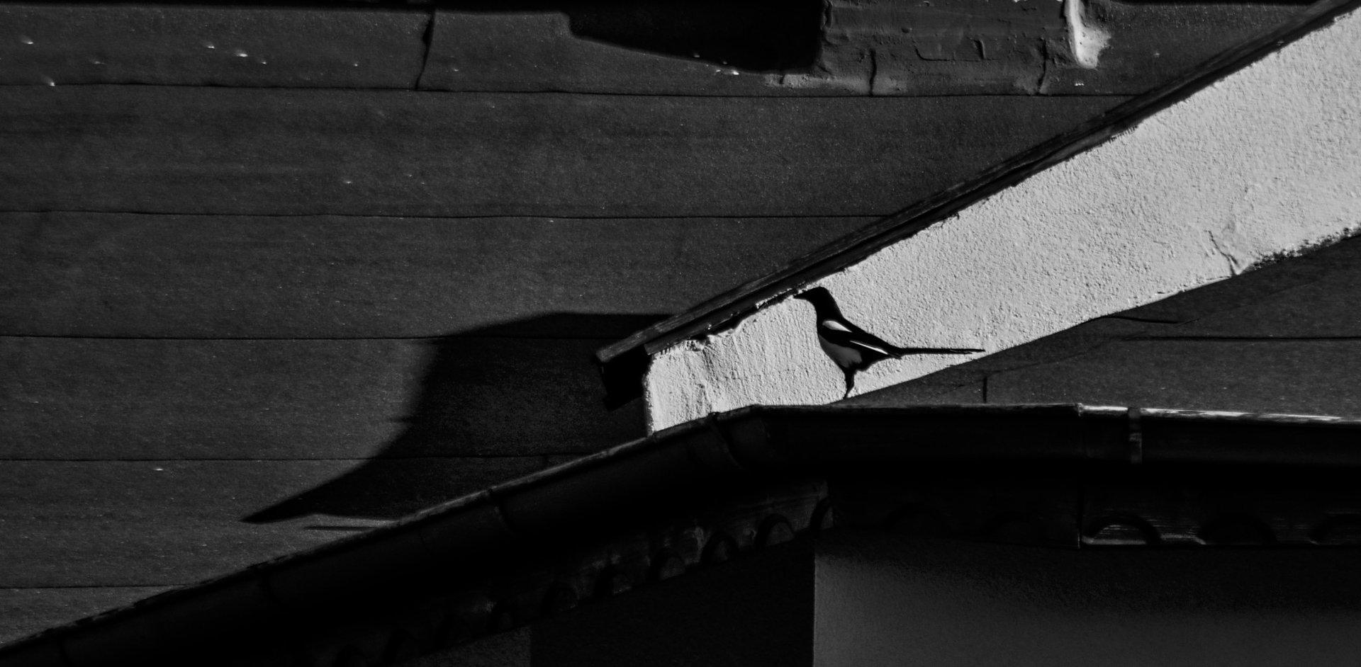 Силуети | Author Stoyan  Baev - neonman | PHOTO FORUM