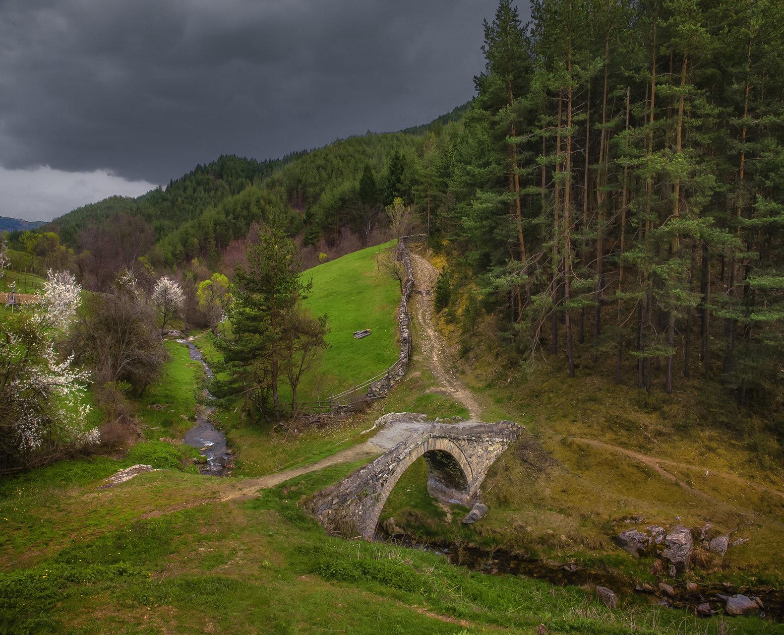 Photo in Nature   Author valery hristov - taurus13   PHOTO FORUM
