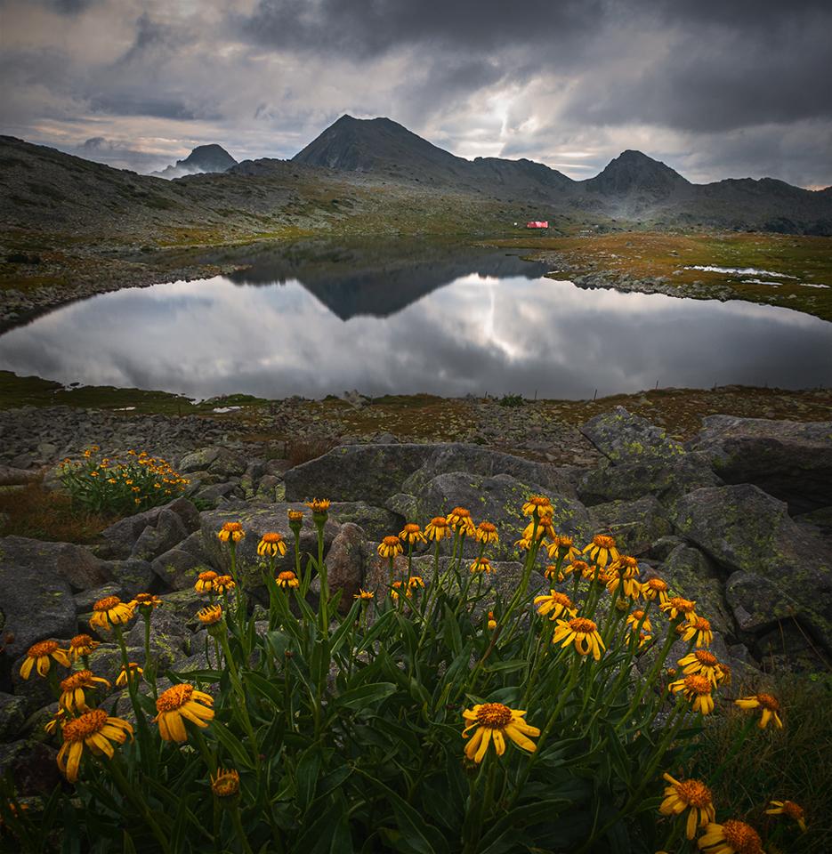 Изгревни цветя | Author Alexander Alexandrov - sandart | PHOTO FORUM