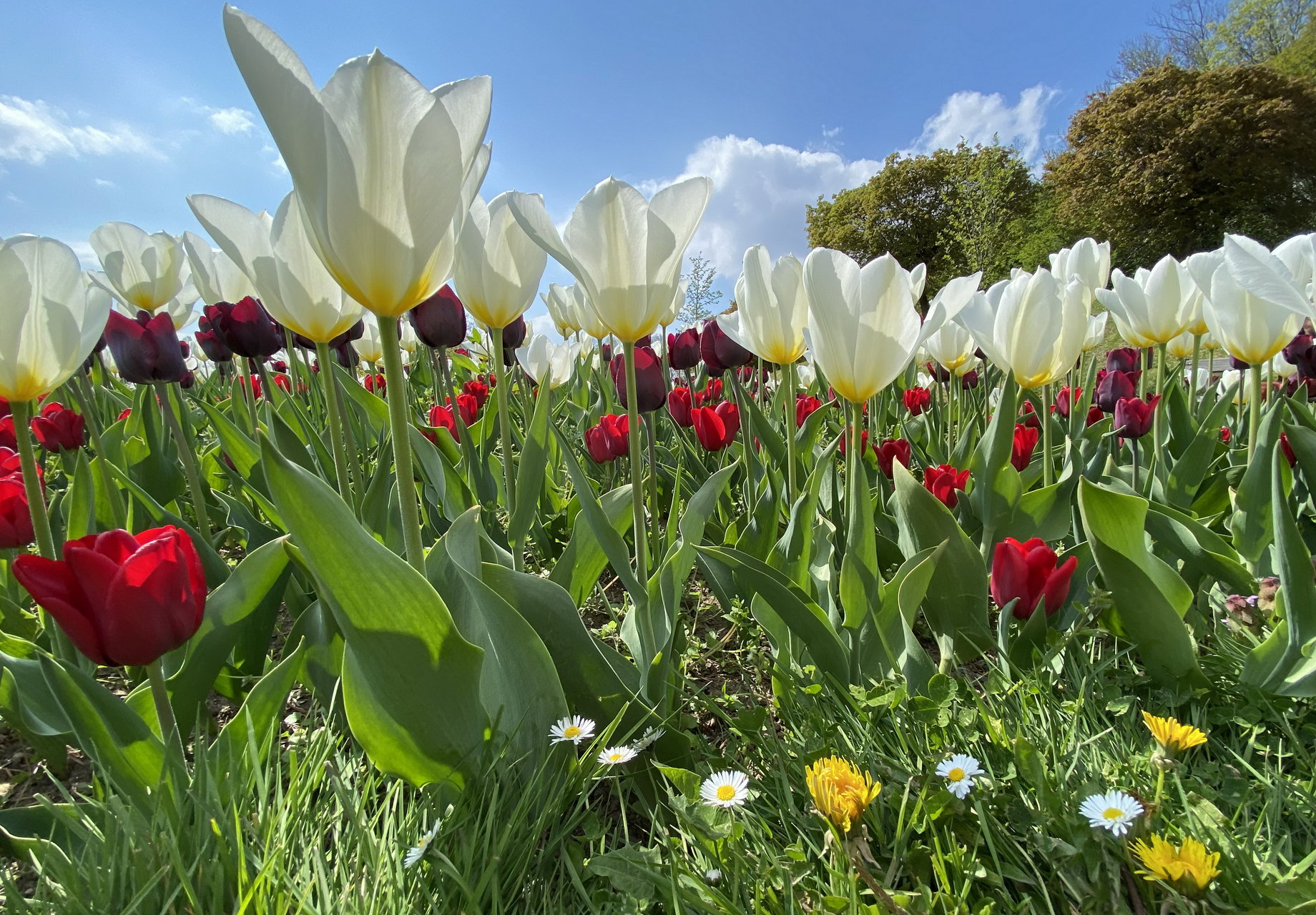 Пролетна бяла магия | Author Marina Nizamska - marinizam | PHOTO FORUM