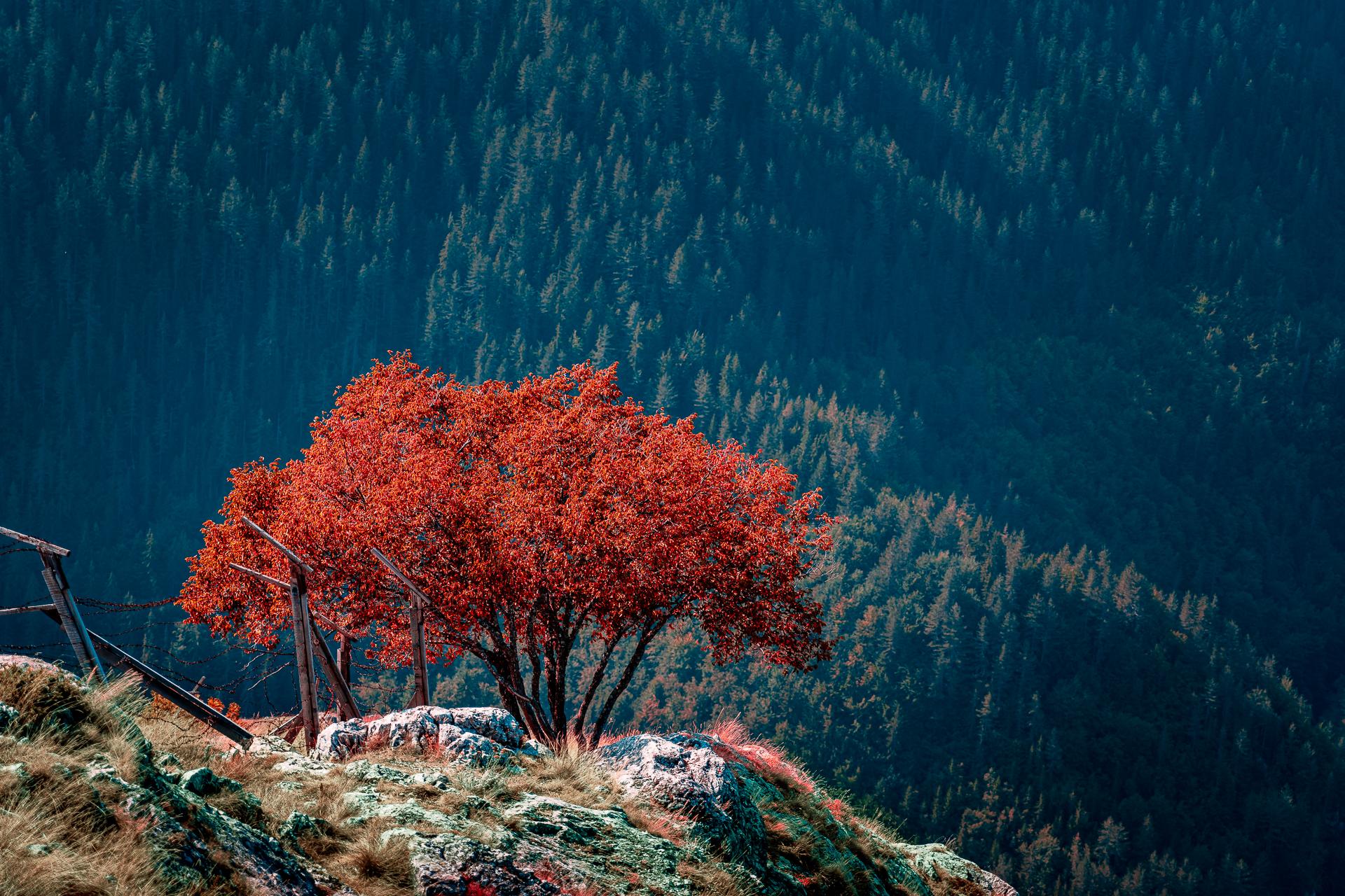Photo in Nature   Author Borislav Kostadinov - Happysoul   PHOTO FORUM