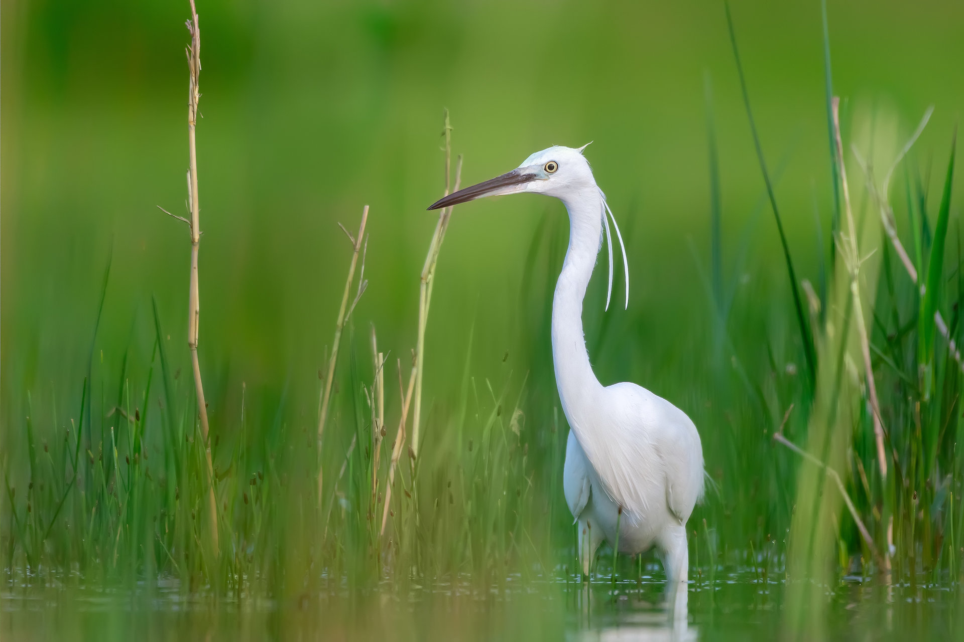 Зелена приказка | Author Dragomir Georgiev - Dragon_bird | PHOTO FORUM