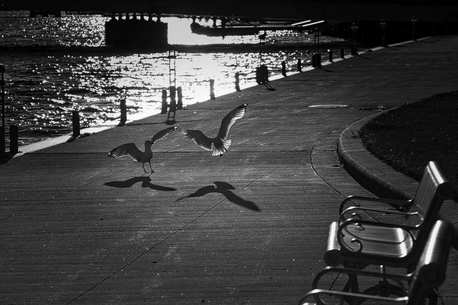 Игра | Author Nikolay Popov - NIK | PHOTO FORUM