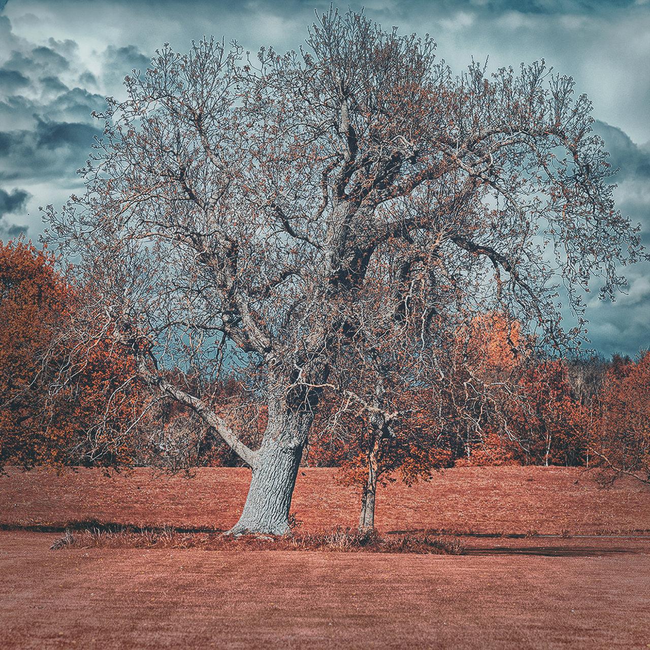 Photo in Nature | Author Krastyu Vasilev - Mr.Chaos | PHOTO FORUM