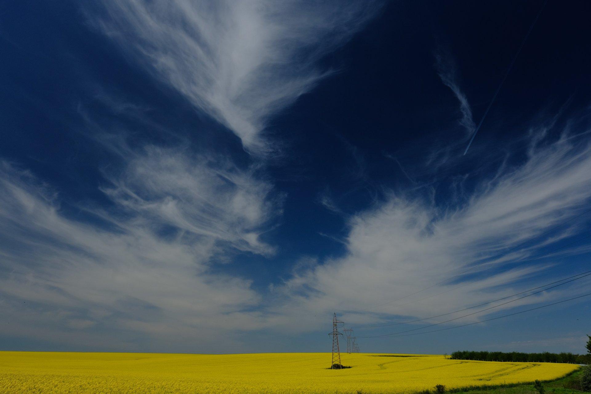Пак е лято и пак има рапица ! Този път е от Добруджа | Author Lubomir Hristov - LUBOMIRHRISTOV | PHOTO FORUM