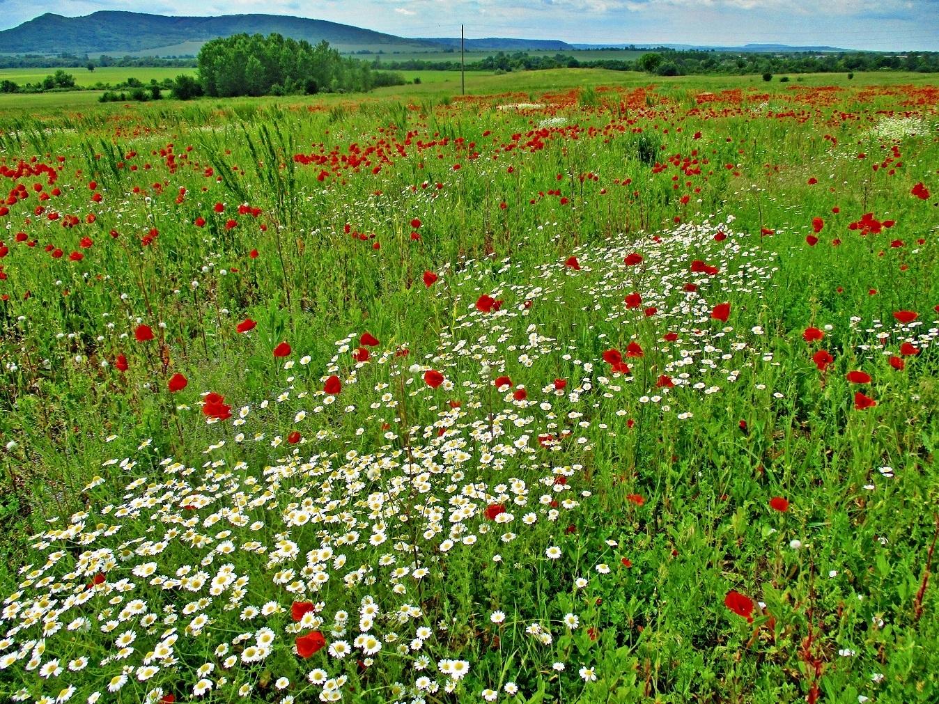 Майска поляна | Author Диди Христова - elanor11 | PHOTO FORUM