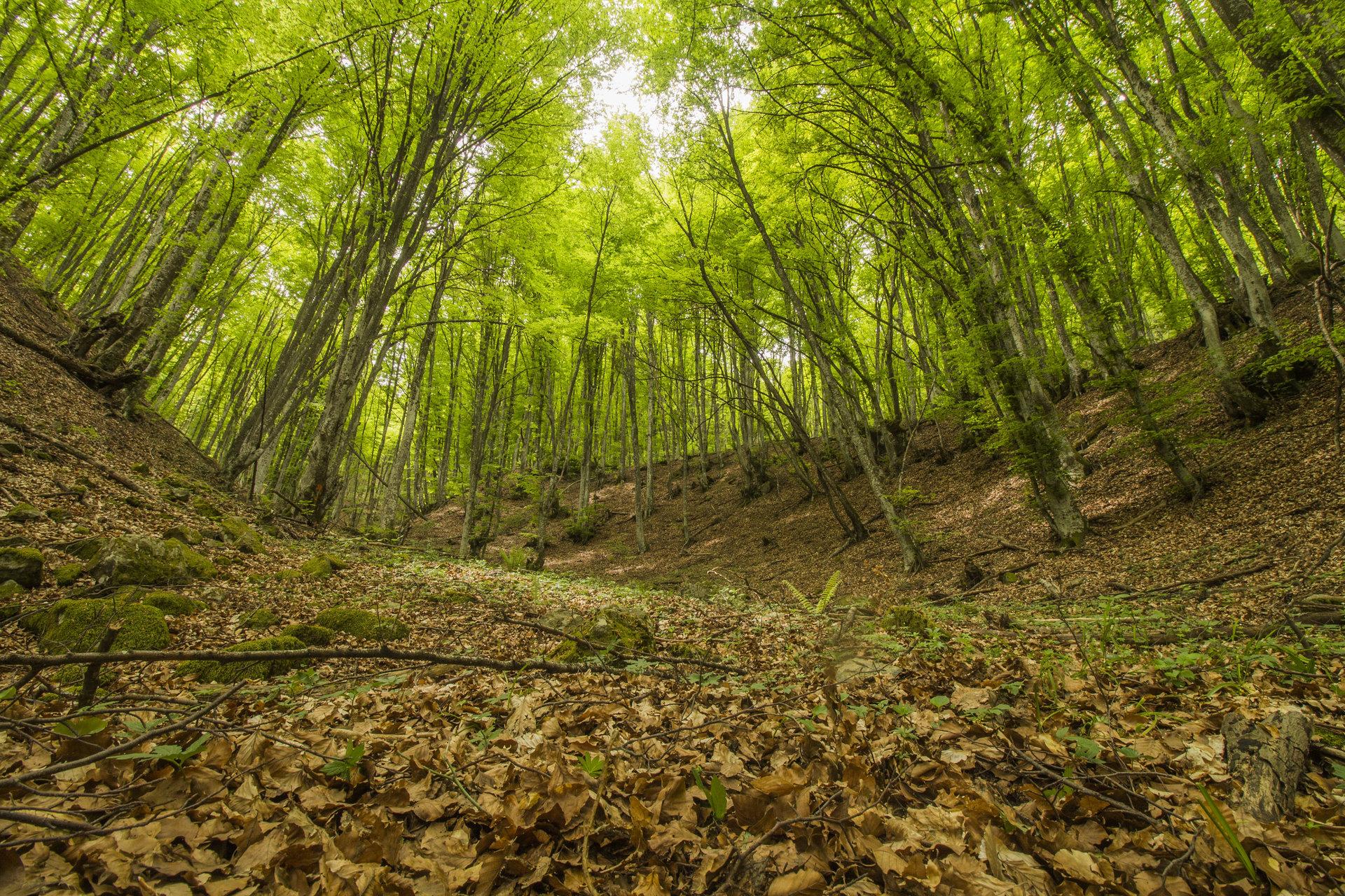 В зелената гора от iliya levkov - levkov87