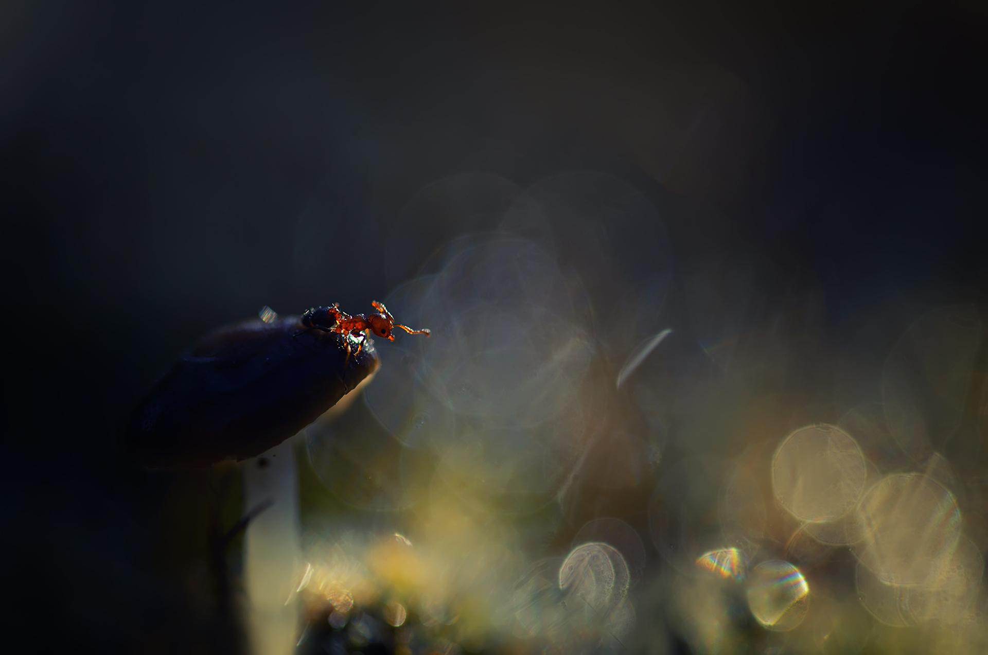 Photo in Macro | Author Хristina Russeva - XristinaRuseva | PHOTO FORUM