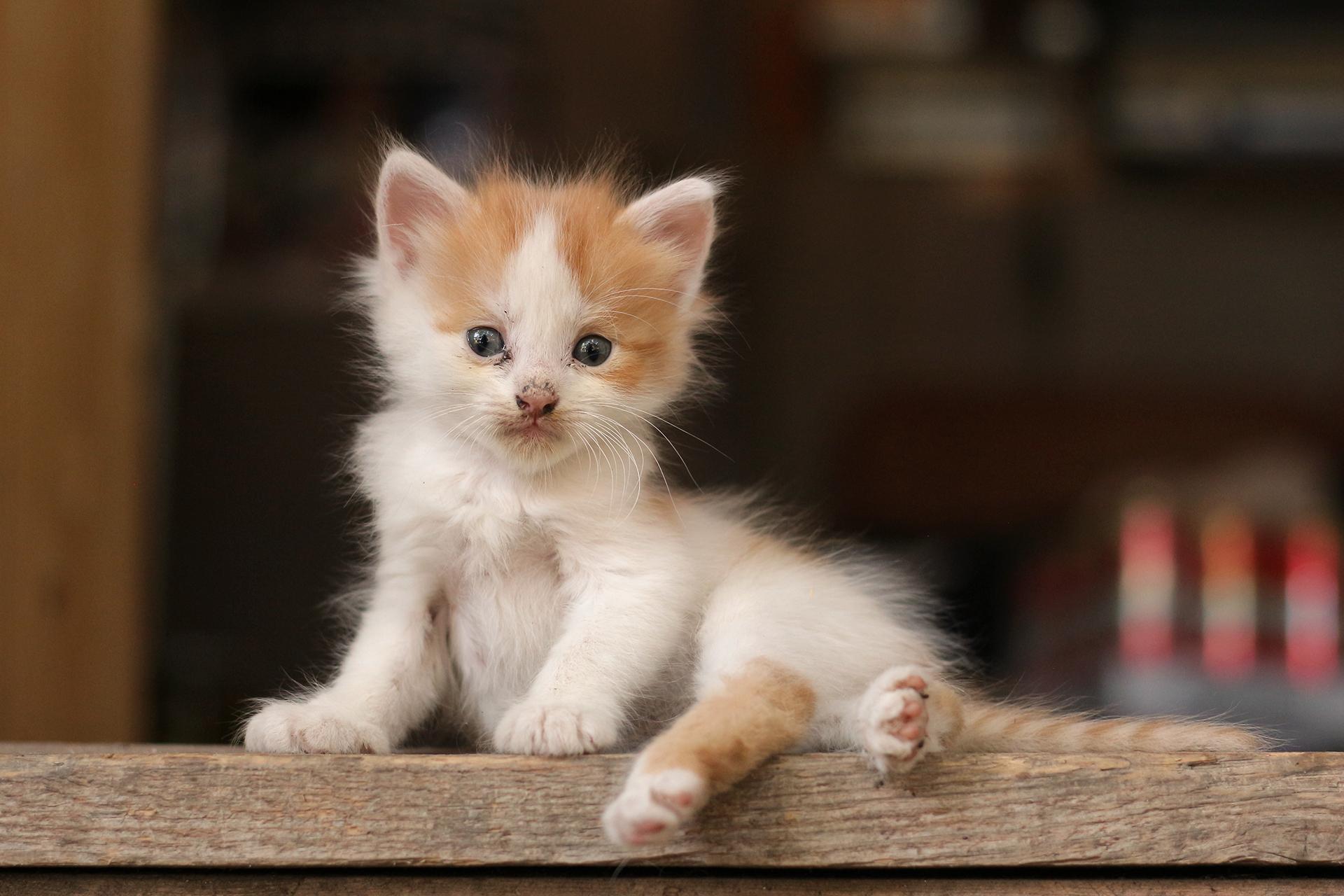 Моето котенце   Author   - fragranse   PHOTO FORUM