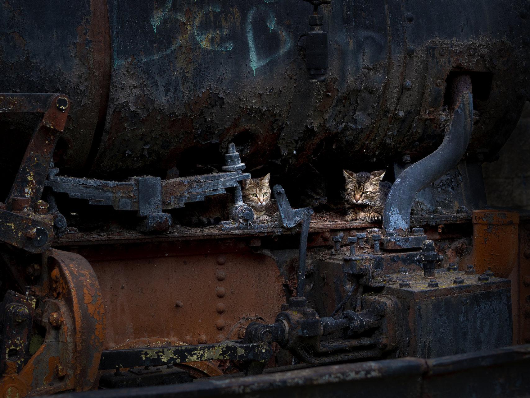 Плахите обитатели на старата вагонетка   Author мирела партинова - mirpar   PHOTO FORUM