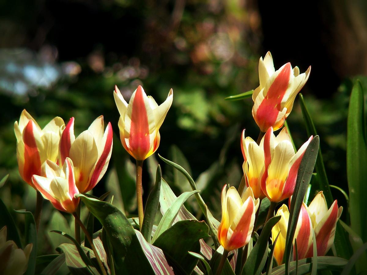 Пролетно цветно... :) от Rayna Ivanova - r_iva