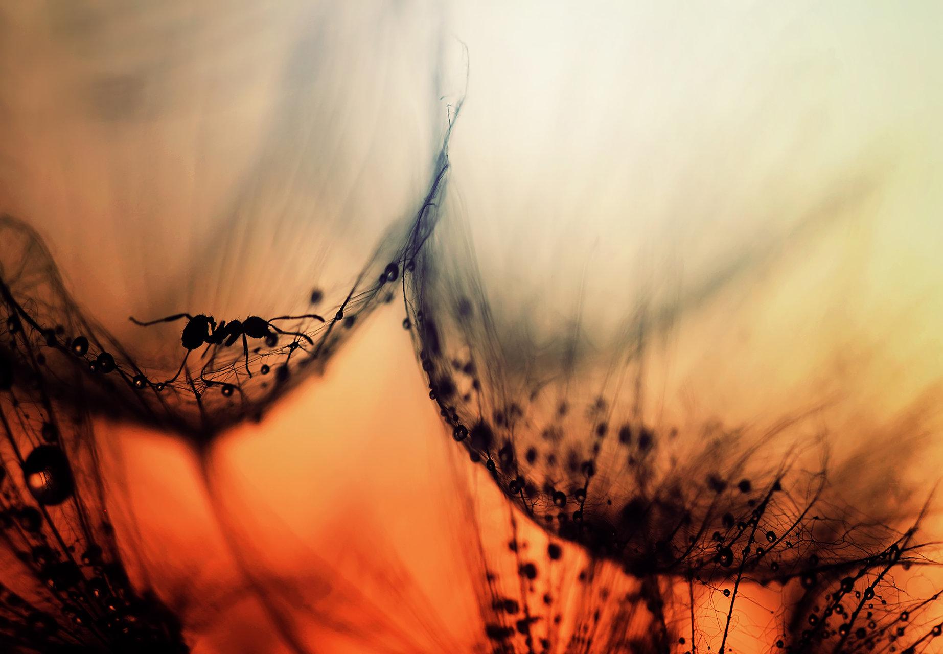 Photo in Backlight | Author Хristina Russeva - XristinaRuseva | PHOTO FORUM