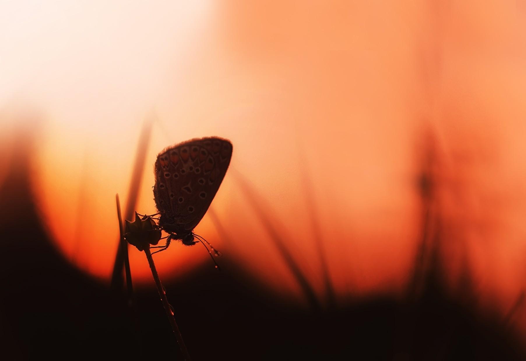 Photo in Backlight | Author Hristina Russeva - XristinaRuseva | PHOTO FORUM
