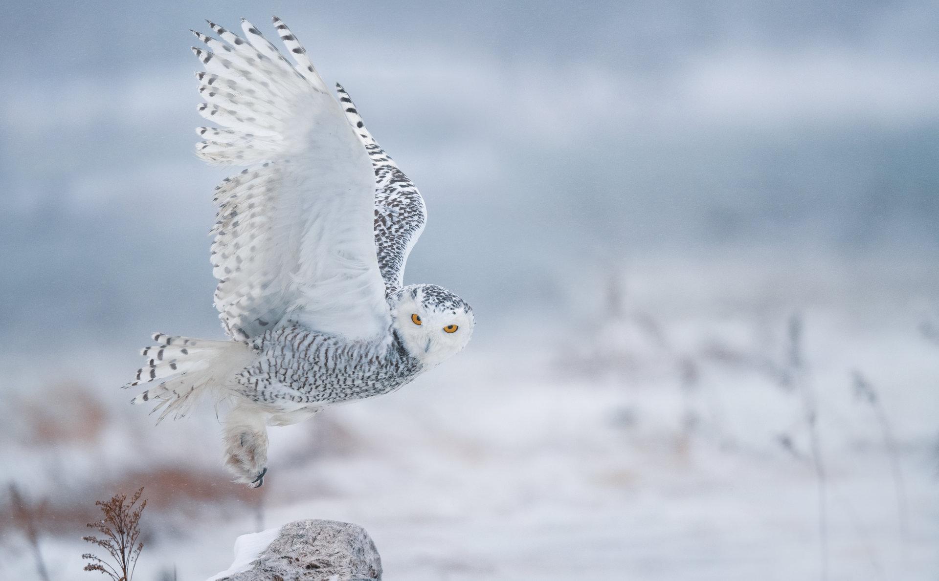 Photo in Wild life | Author Zhoro  - HITTHEROAD | PHOTO FORUM