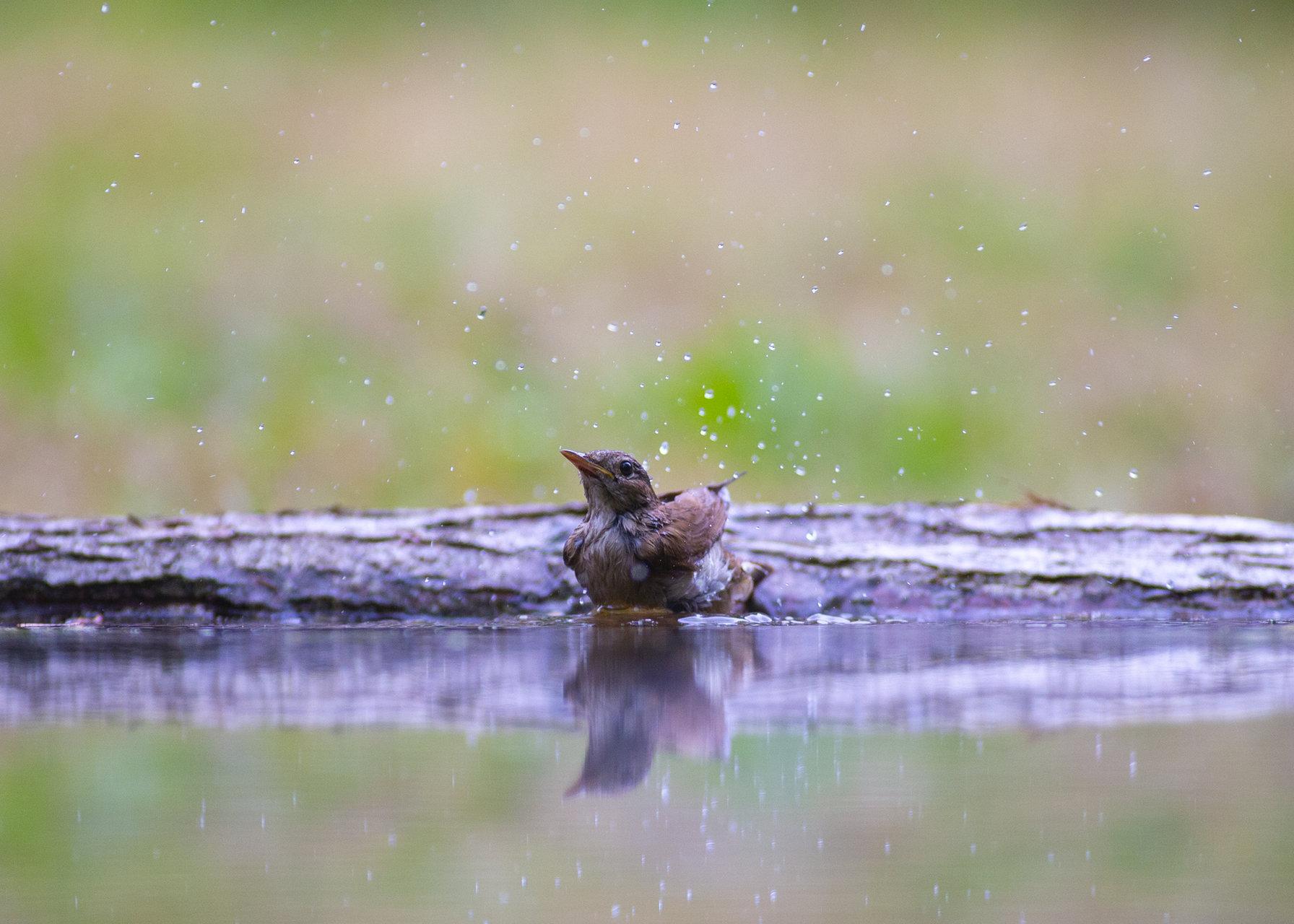 Photo in Wild life | Author Ivajlo Andreev - LorDDemoniC | PHOTO FORUM