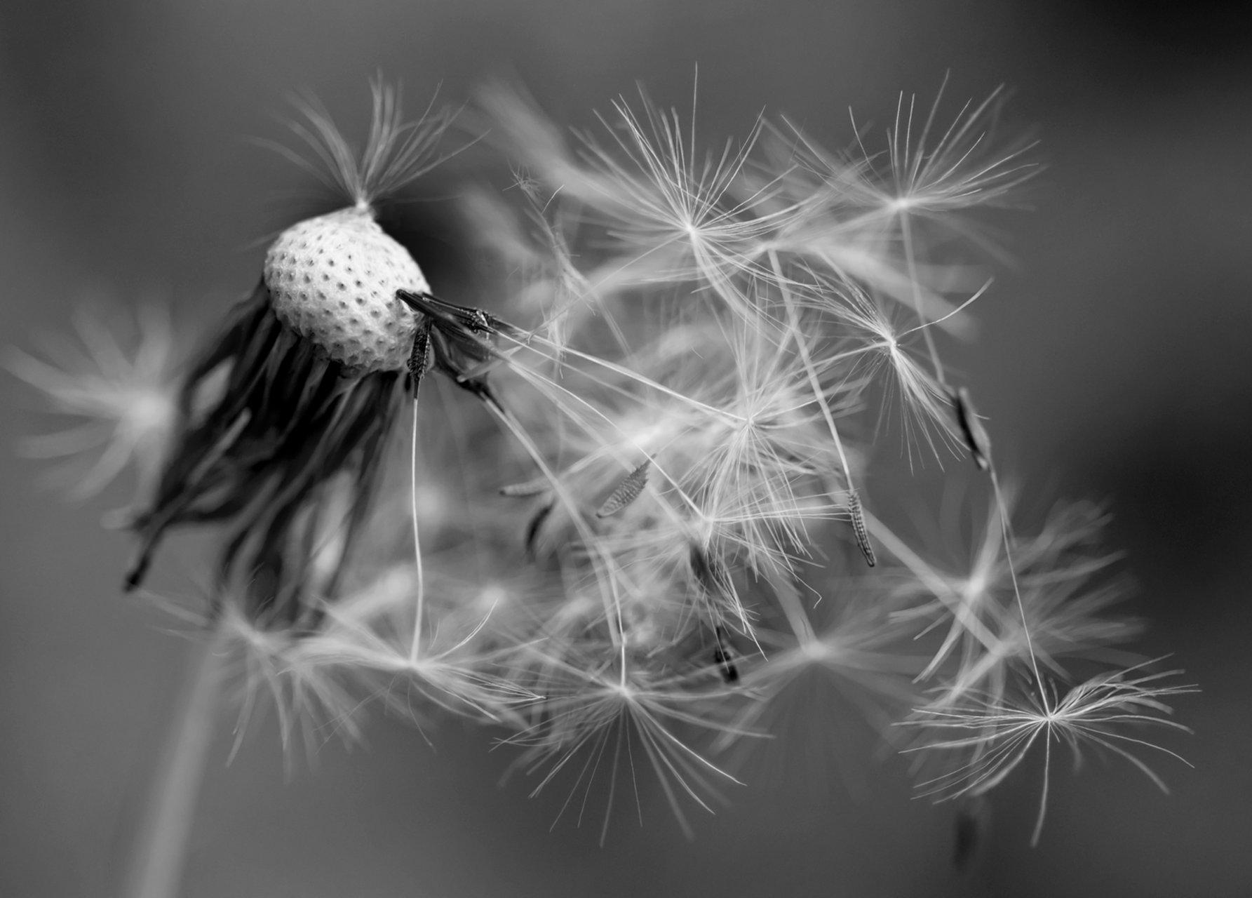 Обичащите вятъра | Author Temi Maramska - Nezabravka | PHOTO FORUM