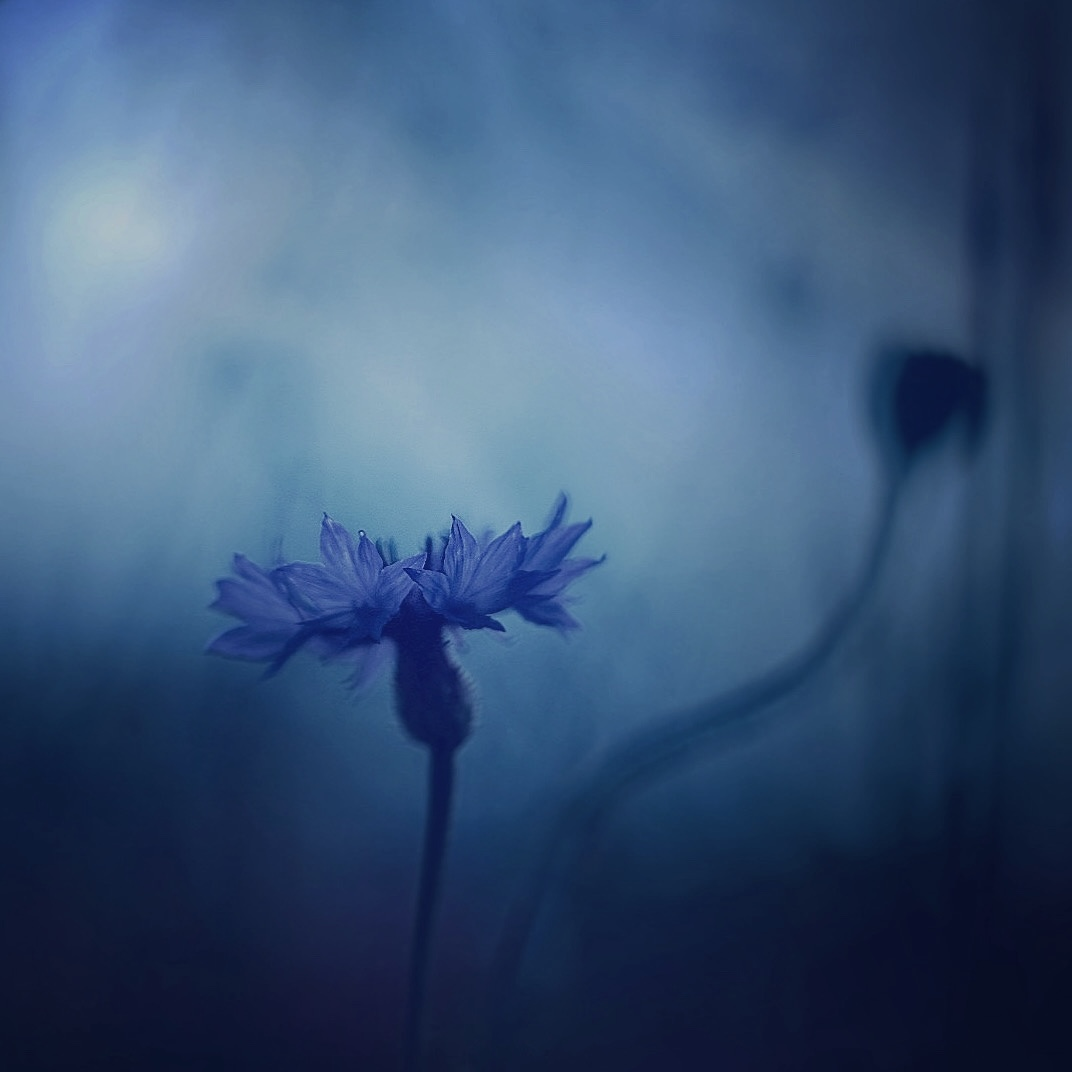 The Bluest Blues | Author Георги Байчев - sevenseconds | PHOTO FORUM