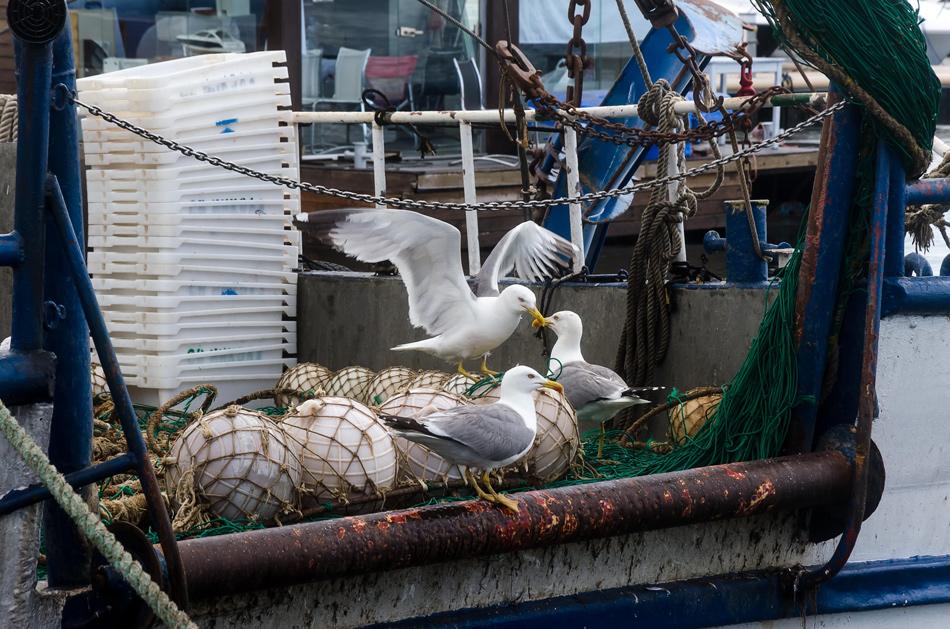 Риболовен кораб   Author liliya konaklieva - liko   PHOTO FORUM