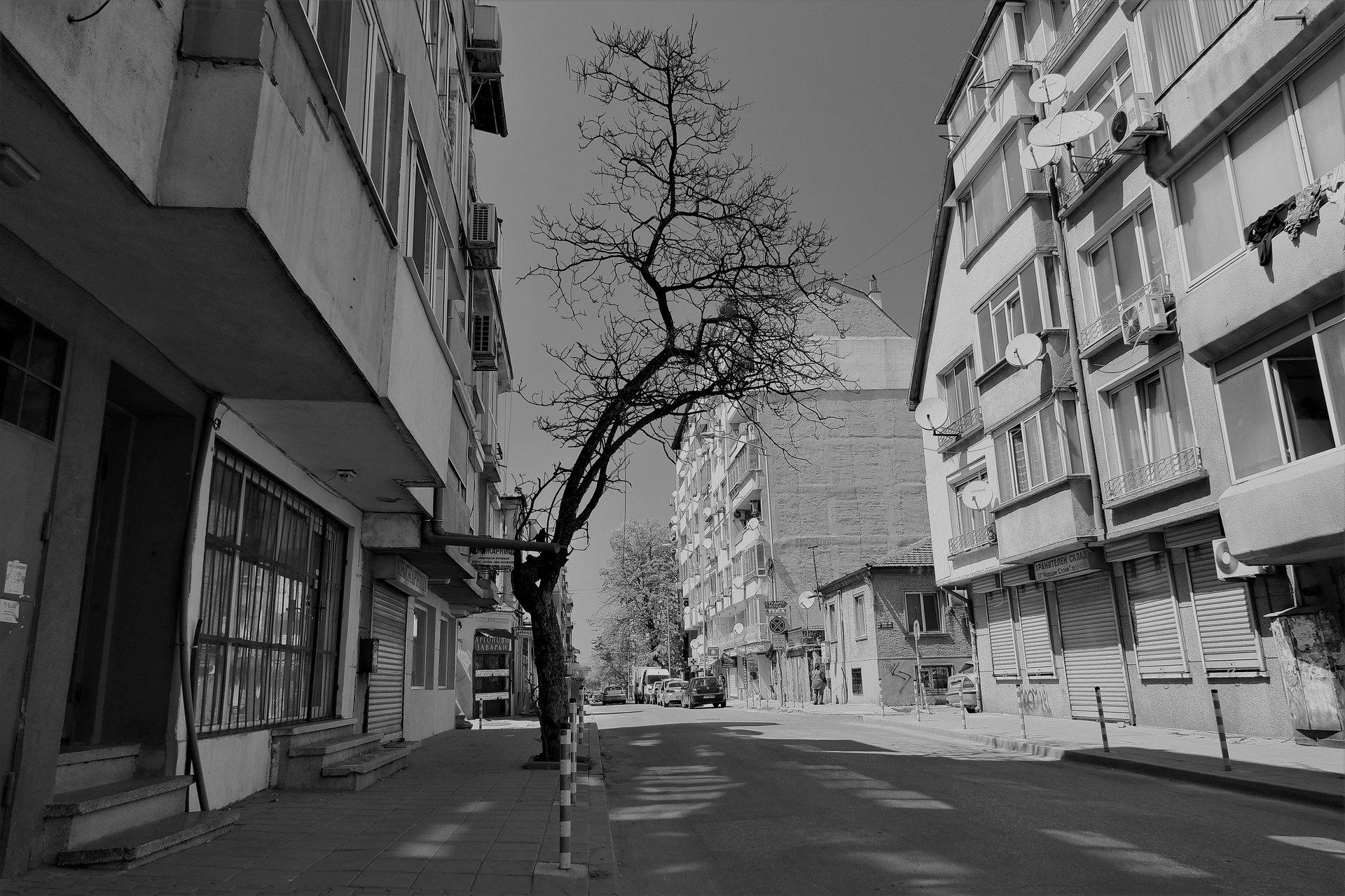 Тази пролет не се разлисти ! | Author Lubomir Hristov - LUBOMIRHRISTOV | PHOTO FORUM