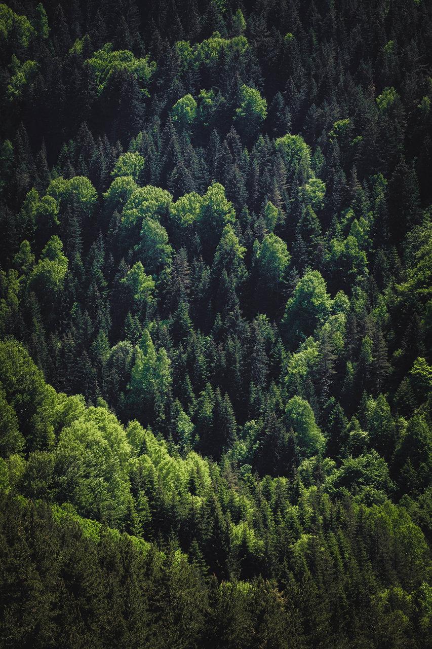 50 нюанса зелено | Author sve  - xSileNce | PHOTO FORUM