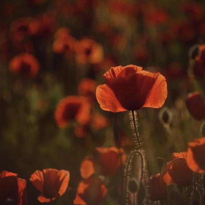 Photo in Nature | Author Георги Байчев - sevenseconds | PHOTO FORUM