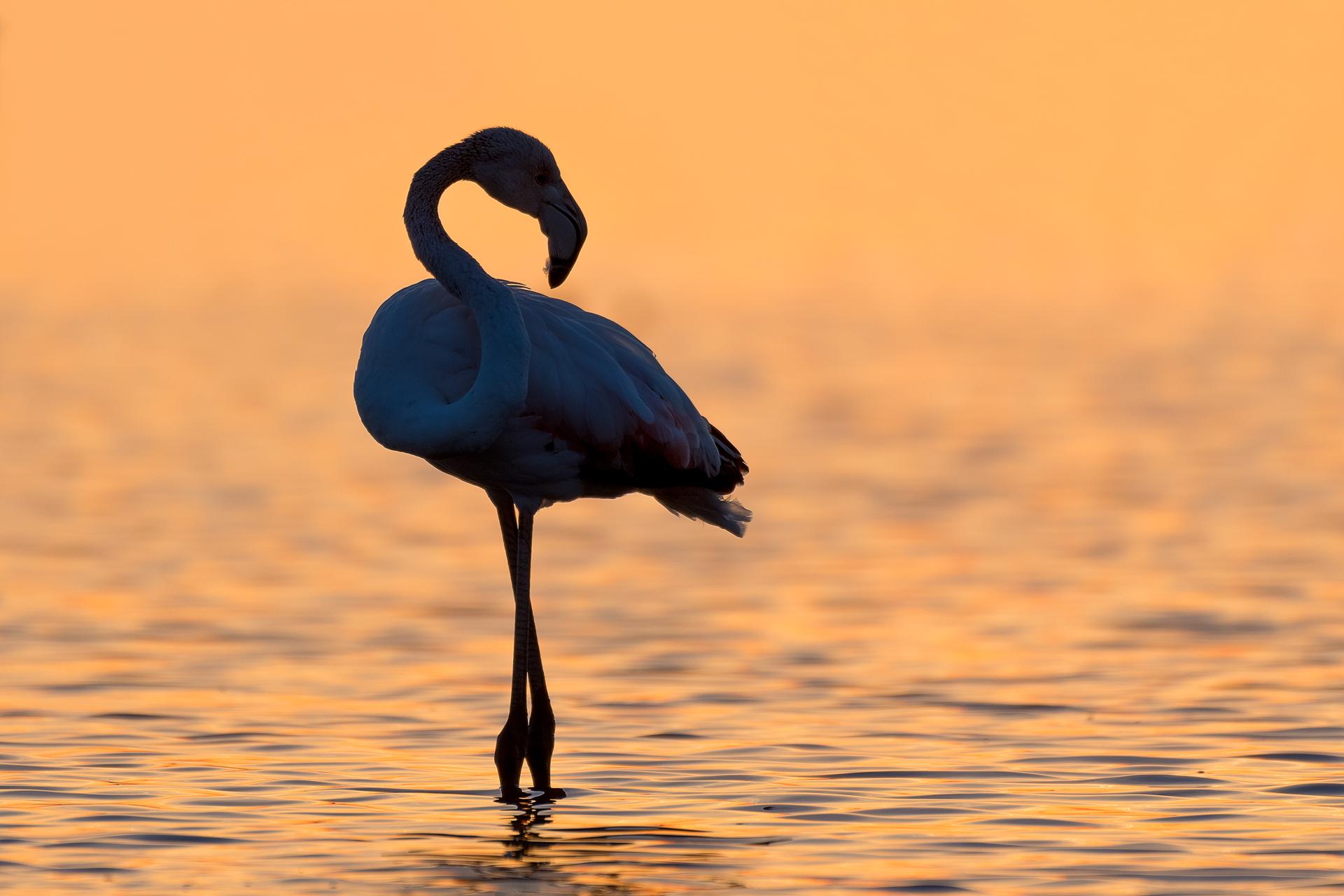 Загадъчният силует от Атанасовско езеро | Author Dragomir Georgiev - Dragon_bird | PHOTO FORUM