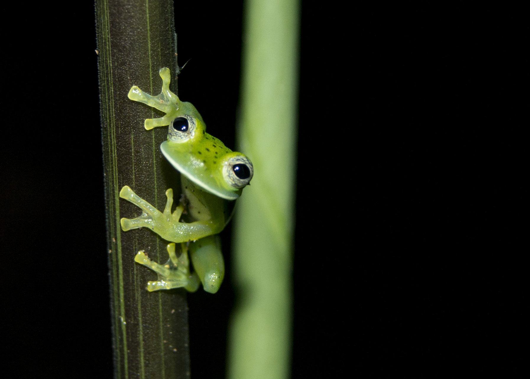 Cute frog 1   Author Stanimira Deleva - viperaaspis   PHOTO FORUM