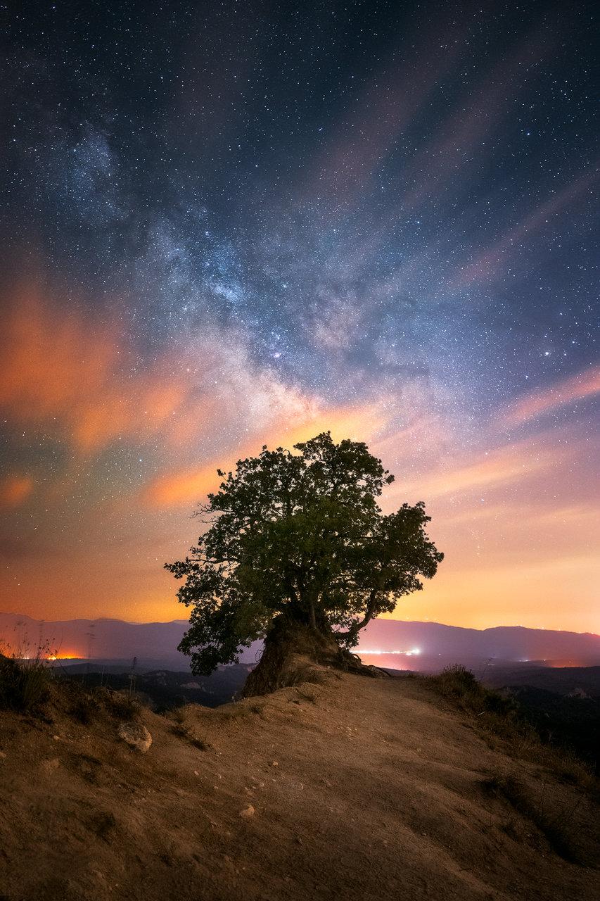 Дървото | Author Mihail Minkov - takama | PHOTO FORUM