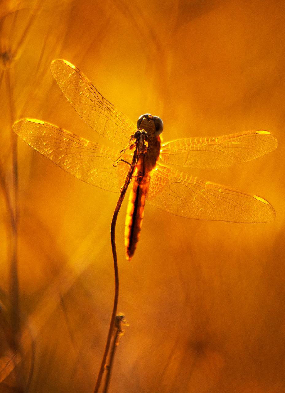Photo in Nature   Author Nadezhda Raycheva - sunnyhope   PHOTO FORUM