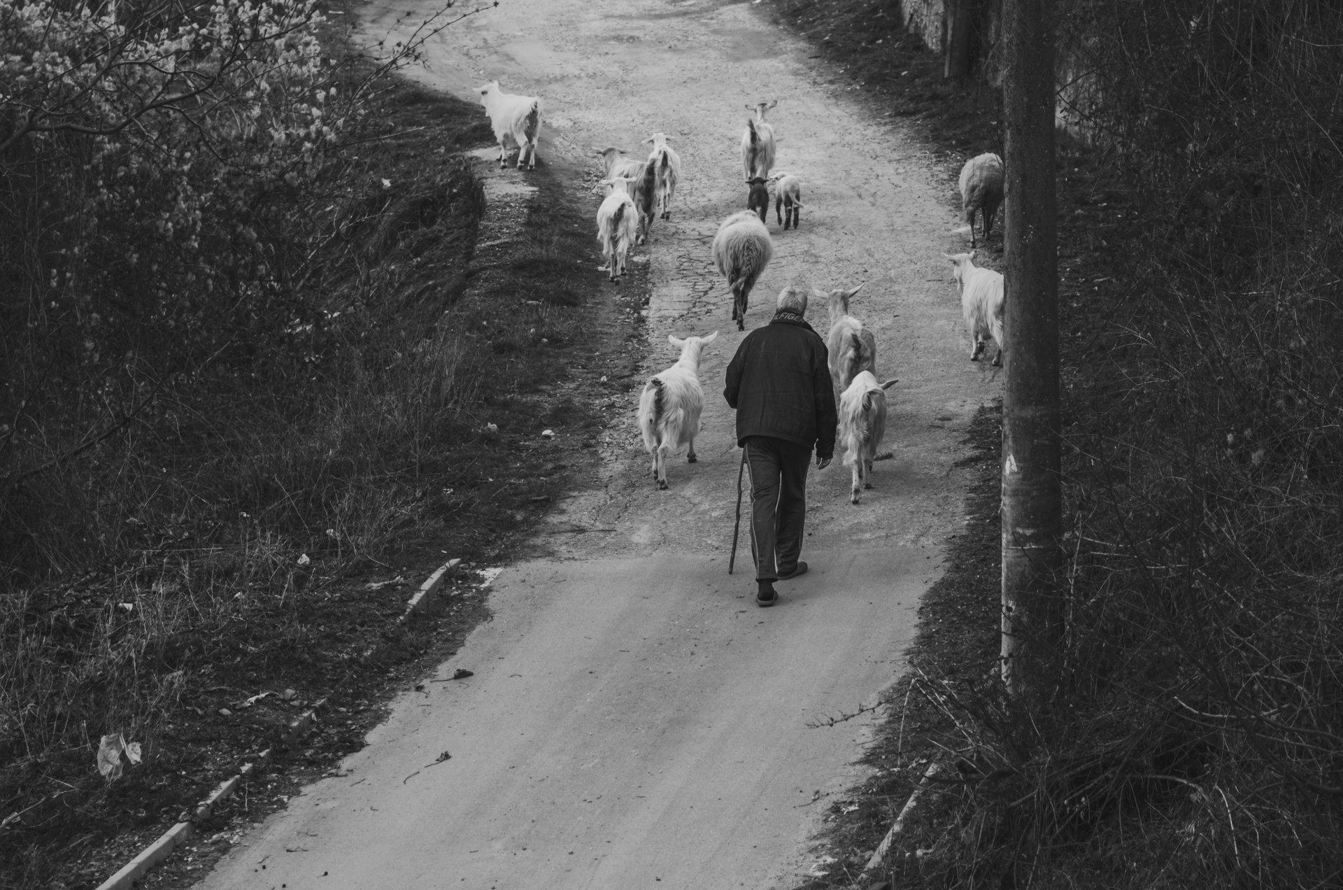 Photo in Street | Author Desislava Ignatova - desiignat | PHOTO FORUM