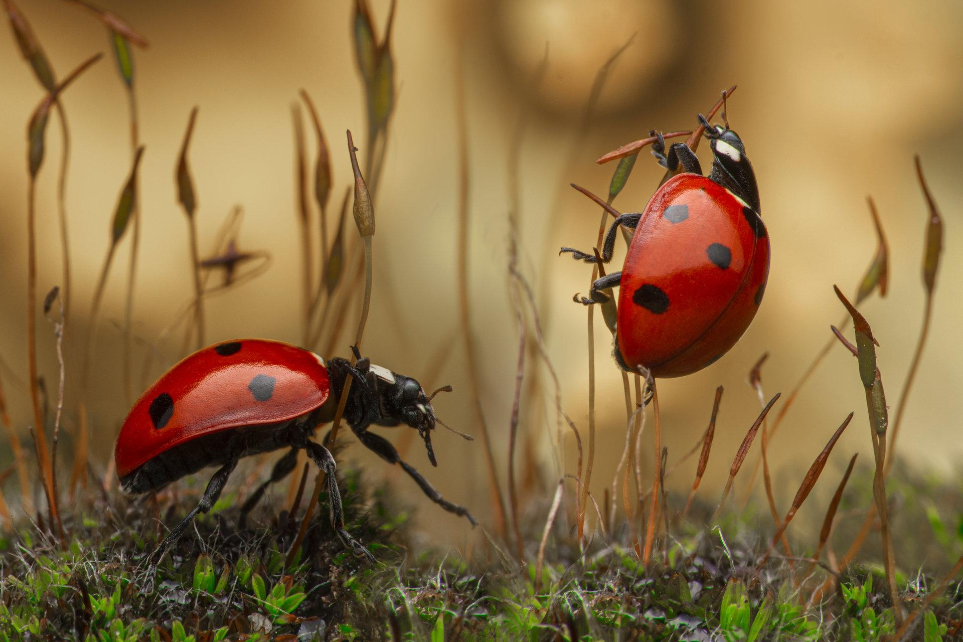 Photo in Color harmony | Author Tsvetan Ganev - ceclii | PHOTO FORUM