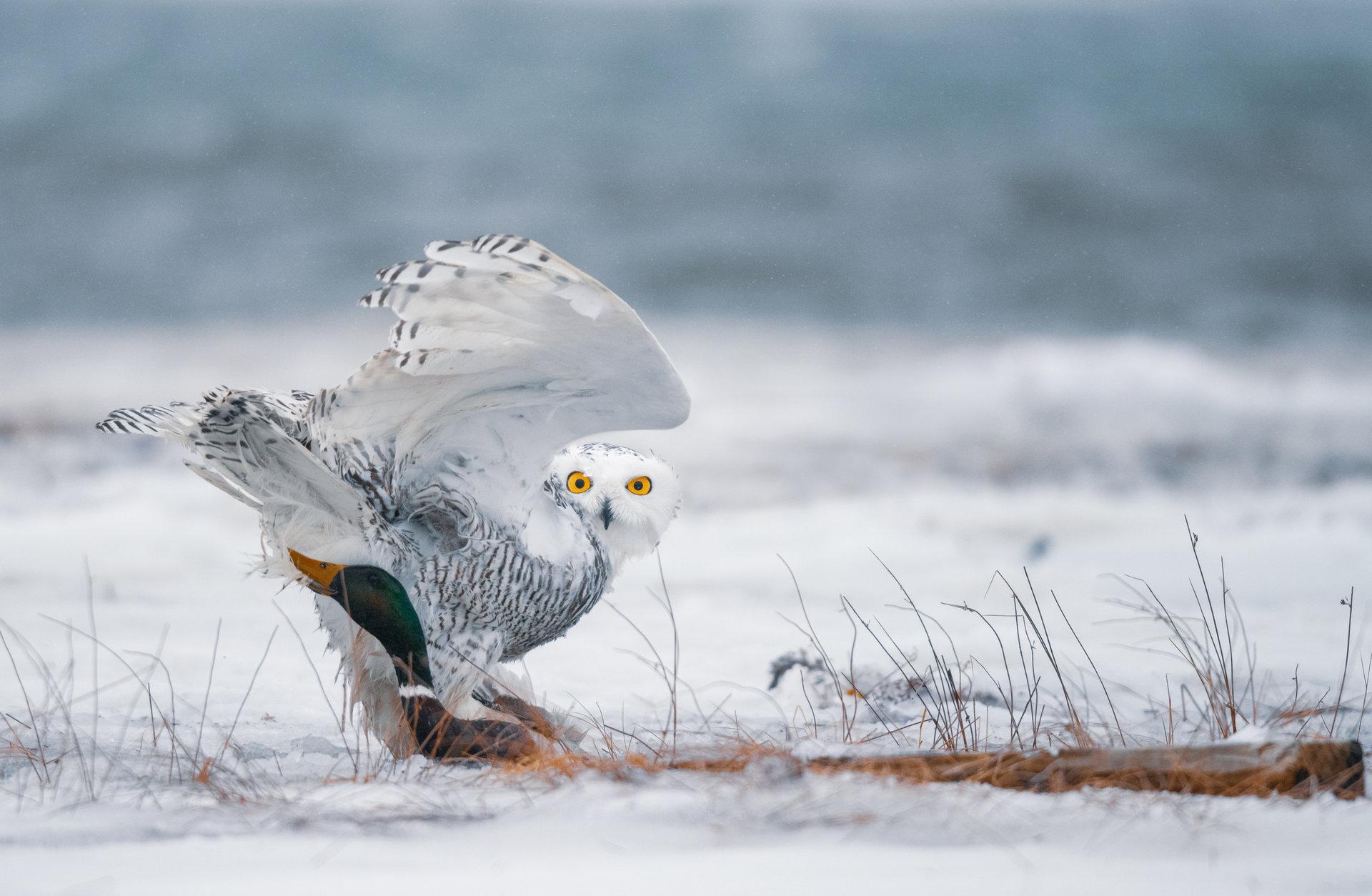 Photo in Wild life   Author Zhoro  - HITTHEROAD   PHOTO FORUM