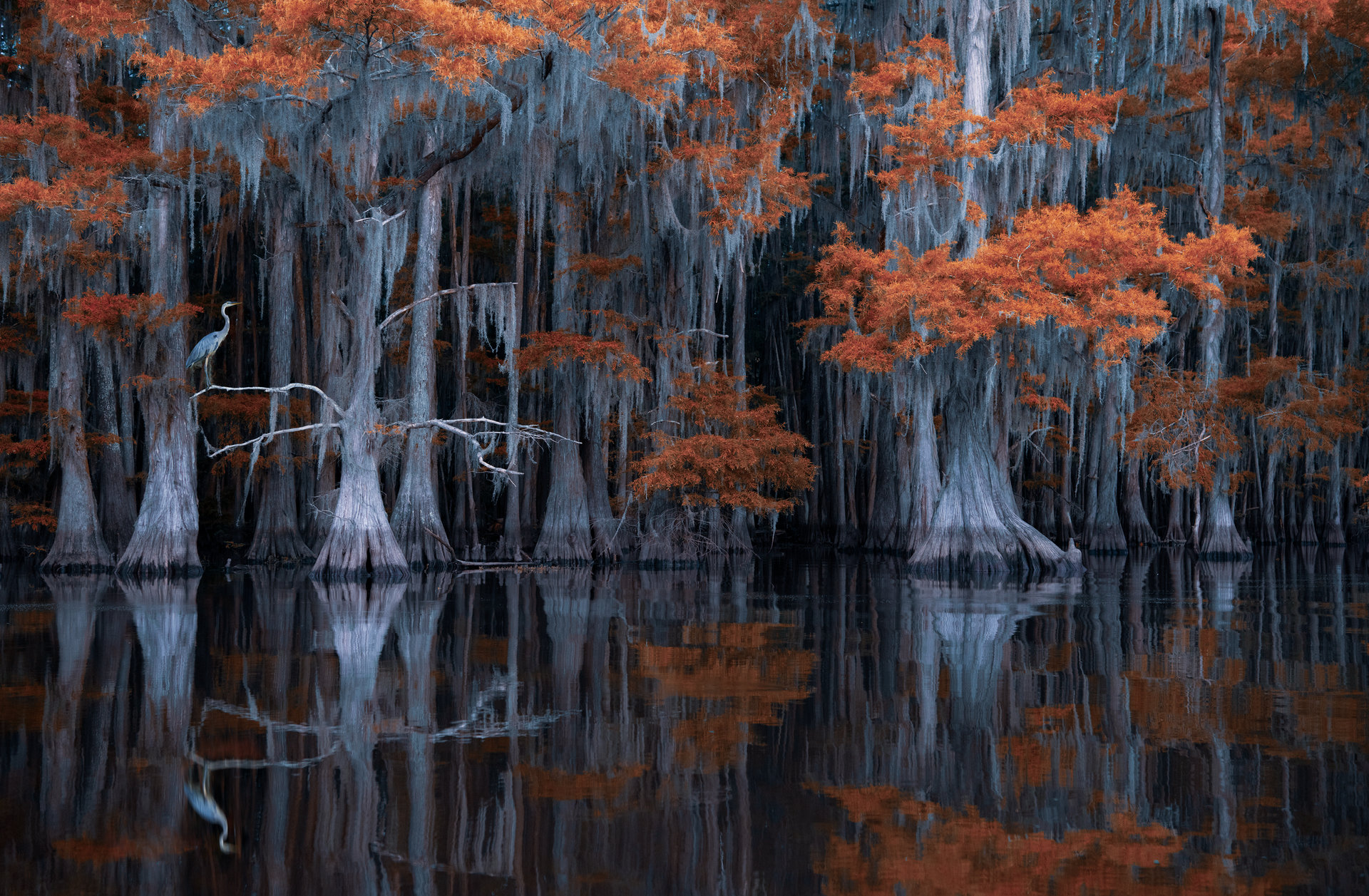 Mystery of the Swamp | Author Zhoro  - HITTHEROAD | PHOTO FORUM