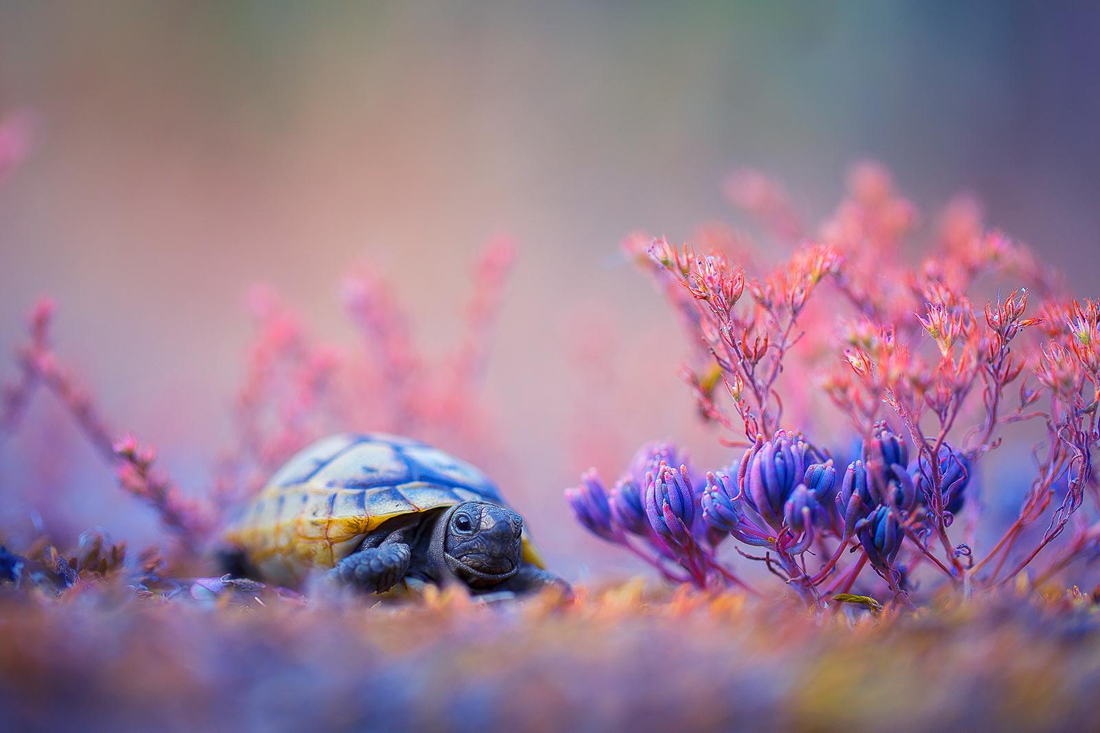 Photo in Wild life   Author Georgi Georgiev - zeromx   PHOTO FORUM