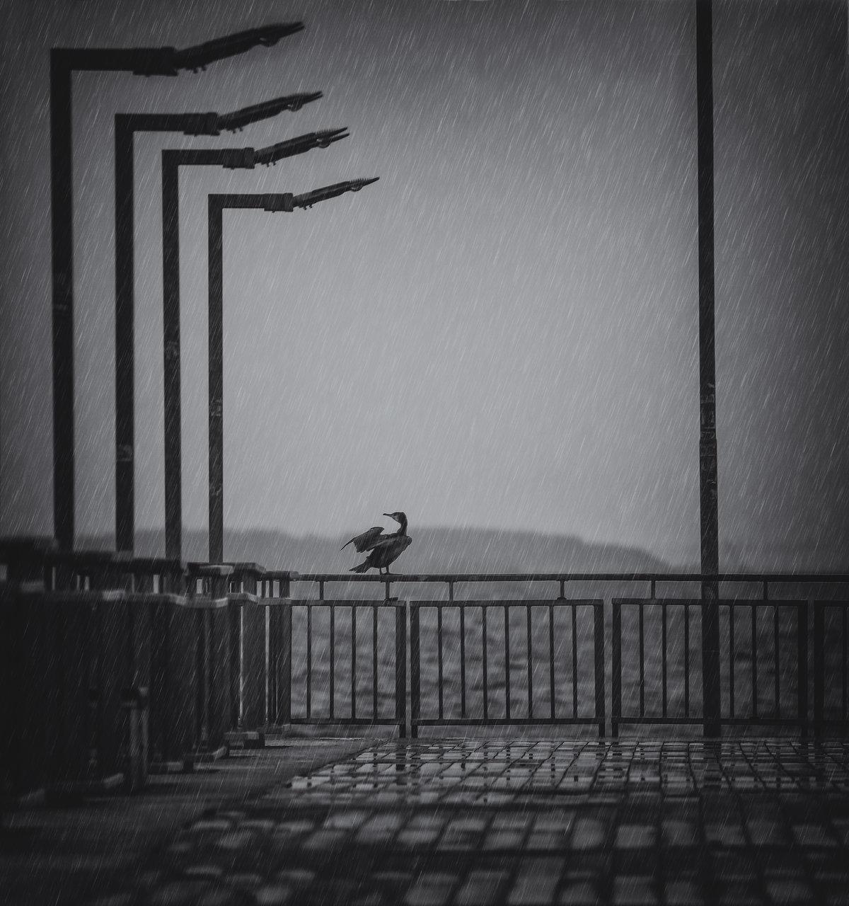 Сам в дъжда | Author Atanas Atanasov - tarantulaxxx | PHOTO FORUM
