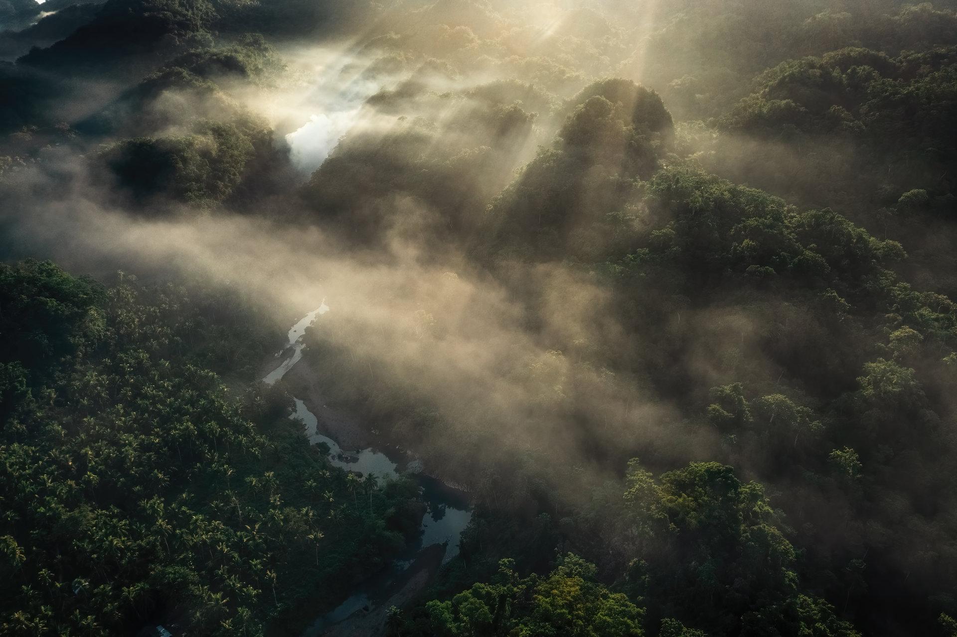 Утро над джунглата   Author Vladimir Karamazov - Vlado79   PHOTO FORUM