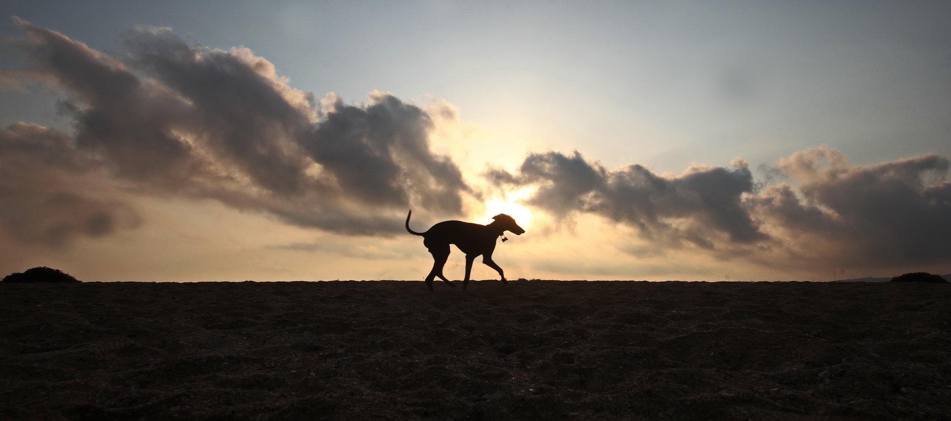 Photo in Everything else   Author rumen somov - carnivore   PHOTO FORUM