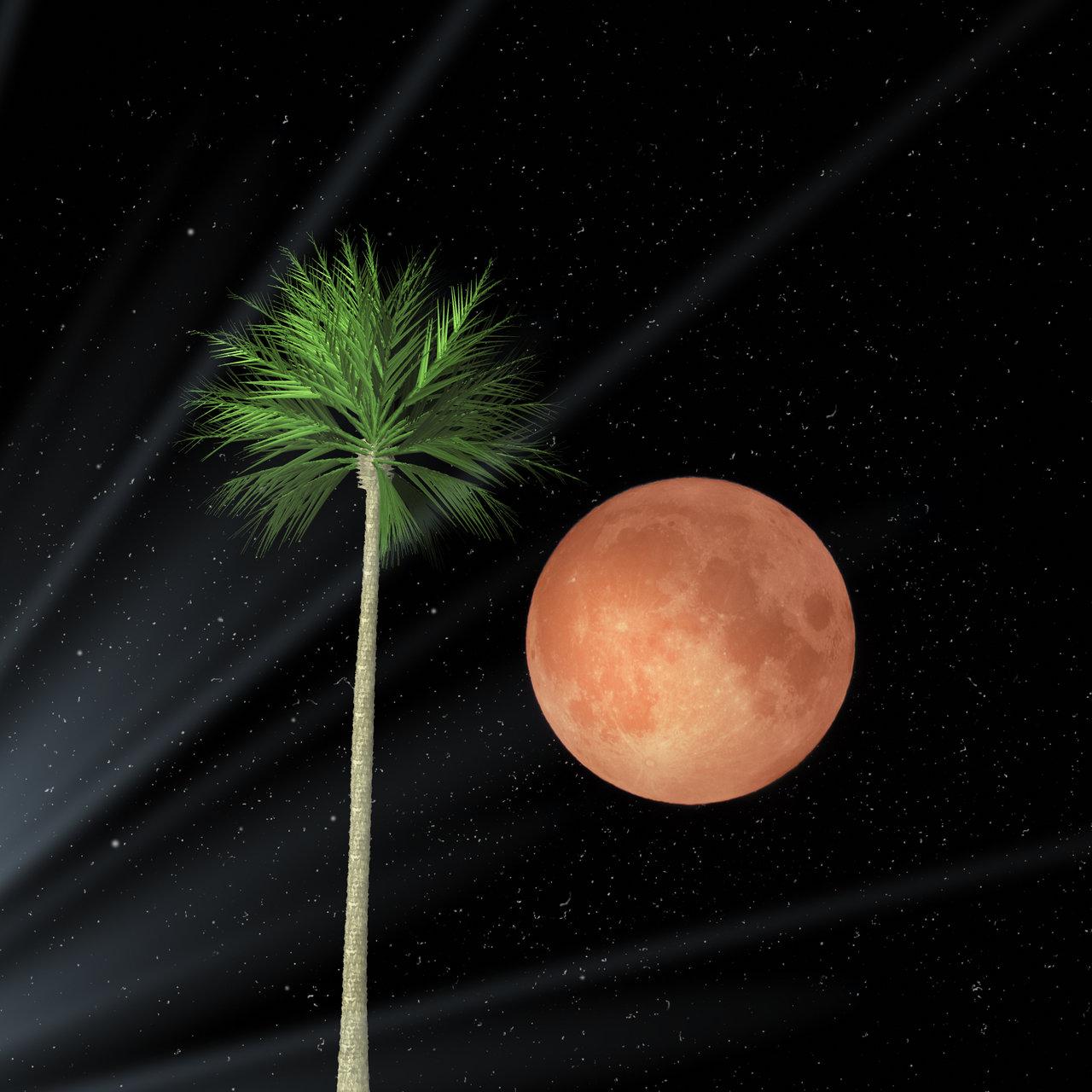 red moon & palm | Author Nikki Georgieva  V E G A N I K - vega_nik | PHOTO FORUM