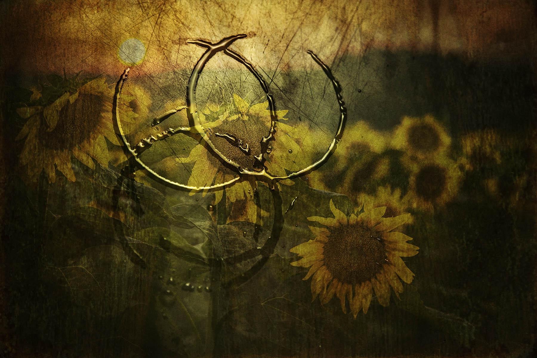 Remembering Sunflowers   Author PAUL BRACEY - PaulBracey   PHOTO FORUM