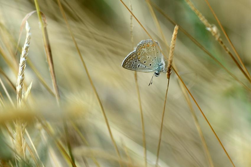 Photo in Nature | Author Alexander Popov - a_p_ | PHOTO FORUM