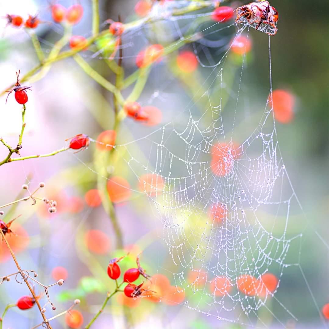 Photo in Nature   Author Elitza Nedkova - Govinda   PHOTO FORUM