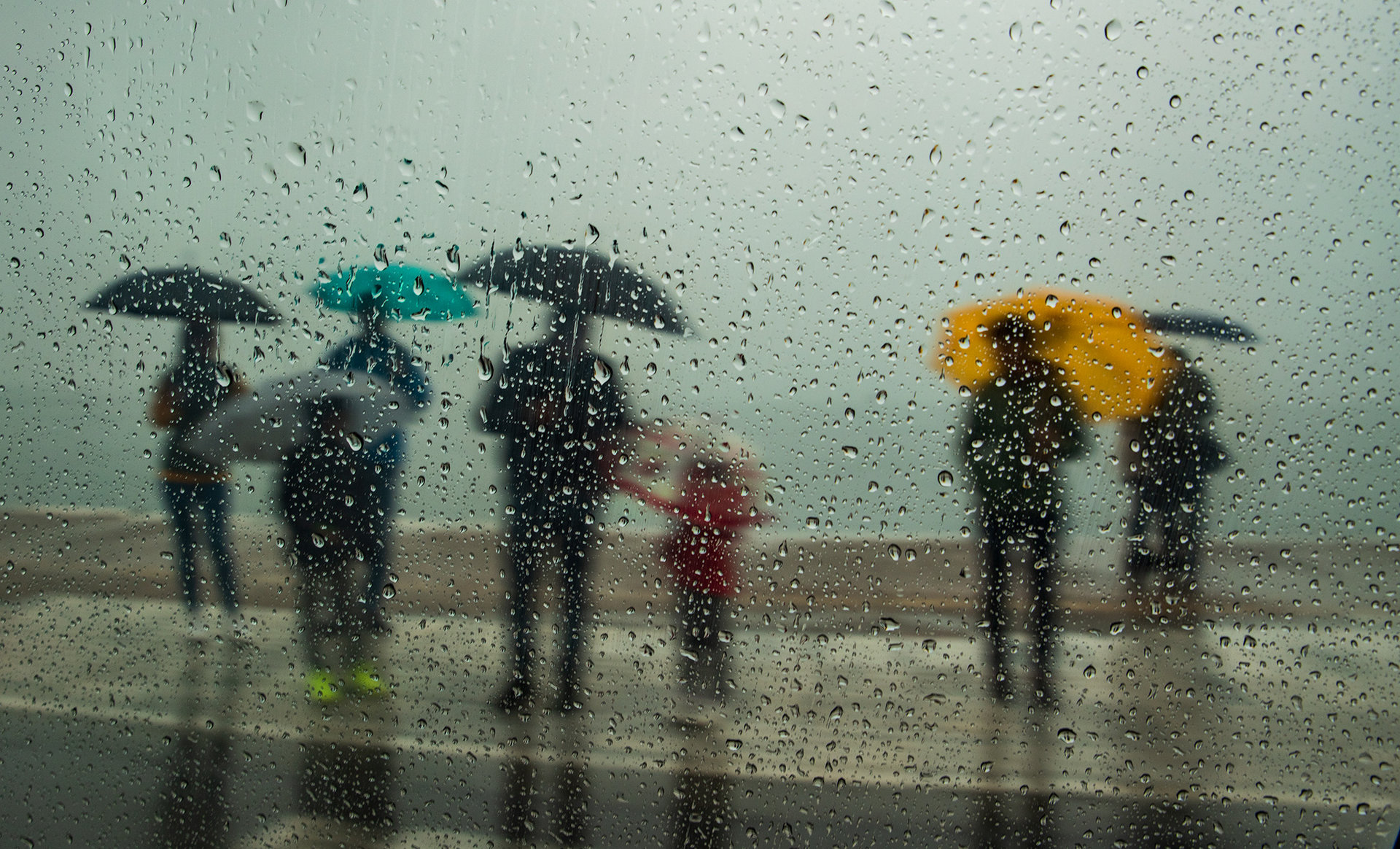Колорит в дъжда | Author TEODORA IVANOVA - dorascal18 | PHOTO FORUM
