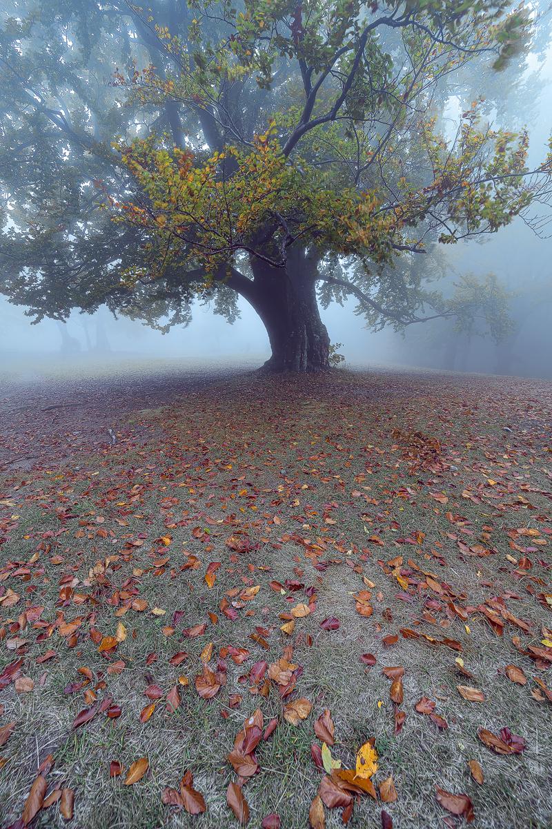 Photo in Landscape   Author Krasimira Mineva - kminareva   PHOTO FORUM