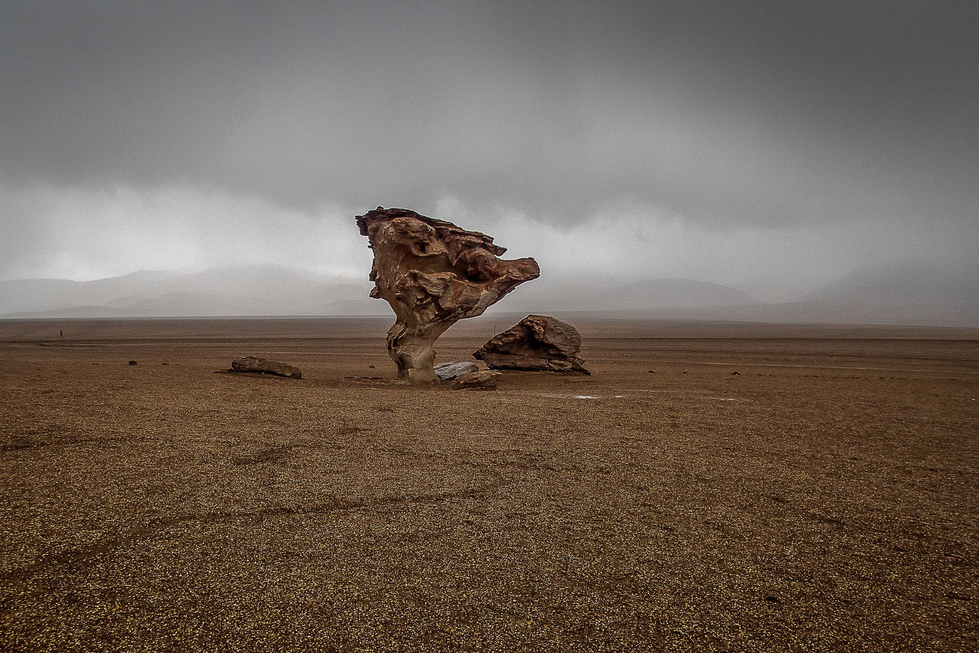Stone tree   Author Ivelina Berova - ivabor   PHOTO FORUM