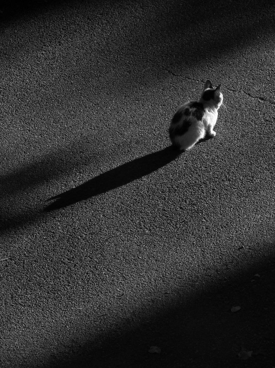 Топличко | Author Zho Re - wosix | PHOTO FORUM
