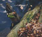 """""""Есенно"""" ; comments:7"""