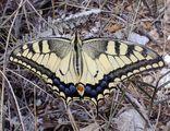 Пеперуда ; comments:23