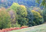 Есенни багри ; comments:10